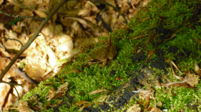 20101112141716_frosch-2-m.282x158-crop.png